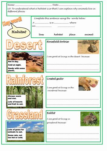 Animal Homes Worksheet Understanding Habitats and Adaptation for Ks1