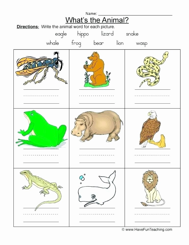 Animals and their Habitats Worksheet Animal Camouflage Worksheets