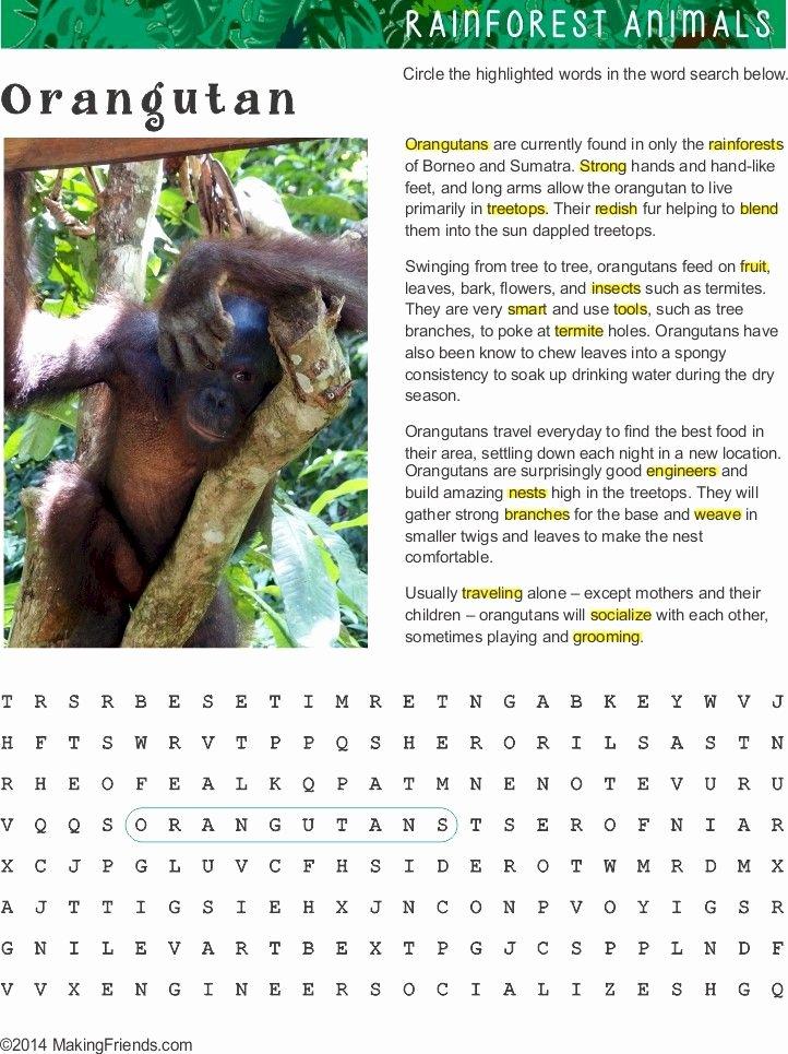 Animals and their Habitats Worksheet Fact Sheet and Word Search for orangutan Habitat