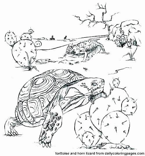 Animals and their Habitats Worksheets Animals Homes Worksheets – Redoakdeer