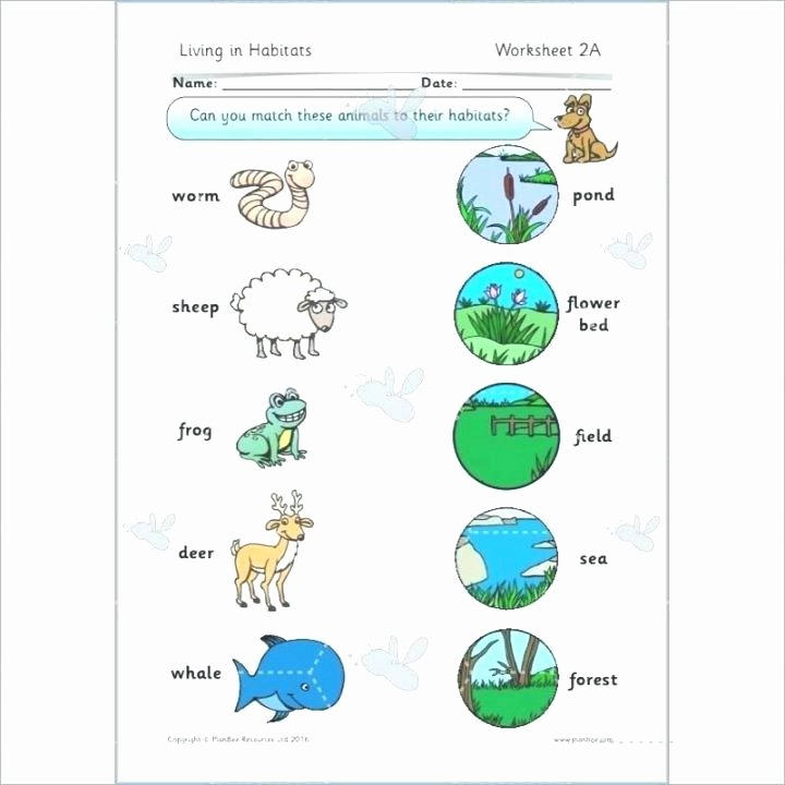 Animals and their Habitats Worksheets Animals In their Habitats Worksheets