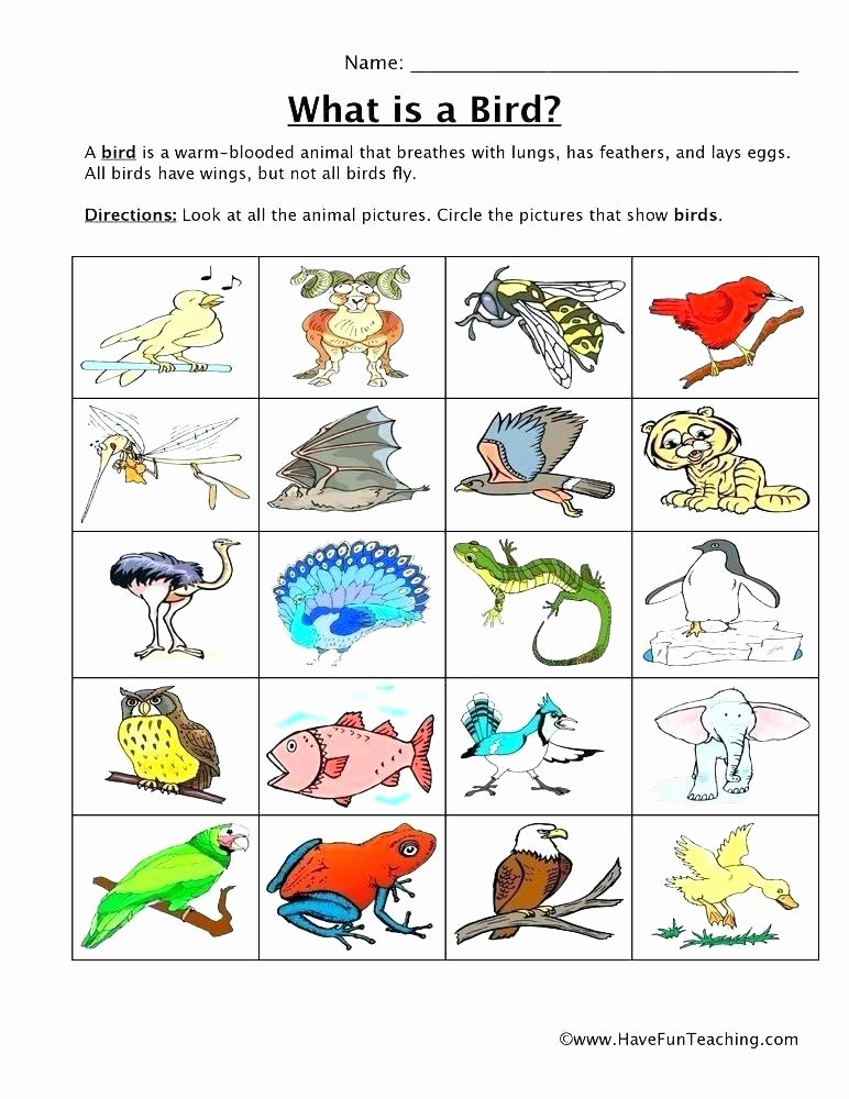Animals and their Habitats Worksheets Pet Worksheets for Grade 1