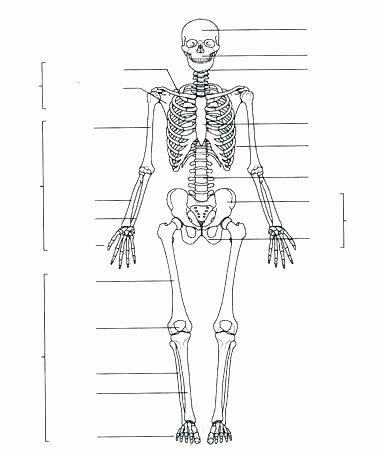 Blank Bone Worksheets Awesome Blank Head Diagram Wiring Diagrams List