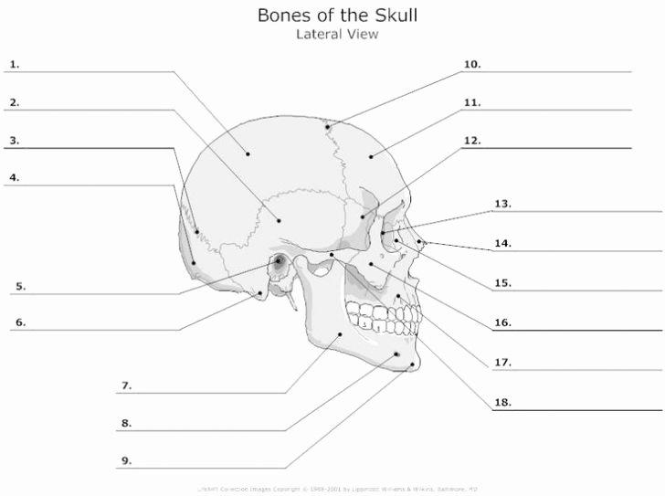 Blank Bone Worksheets Best Of Anatomy Labeling Worksheets Redwoodsmedia