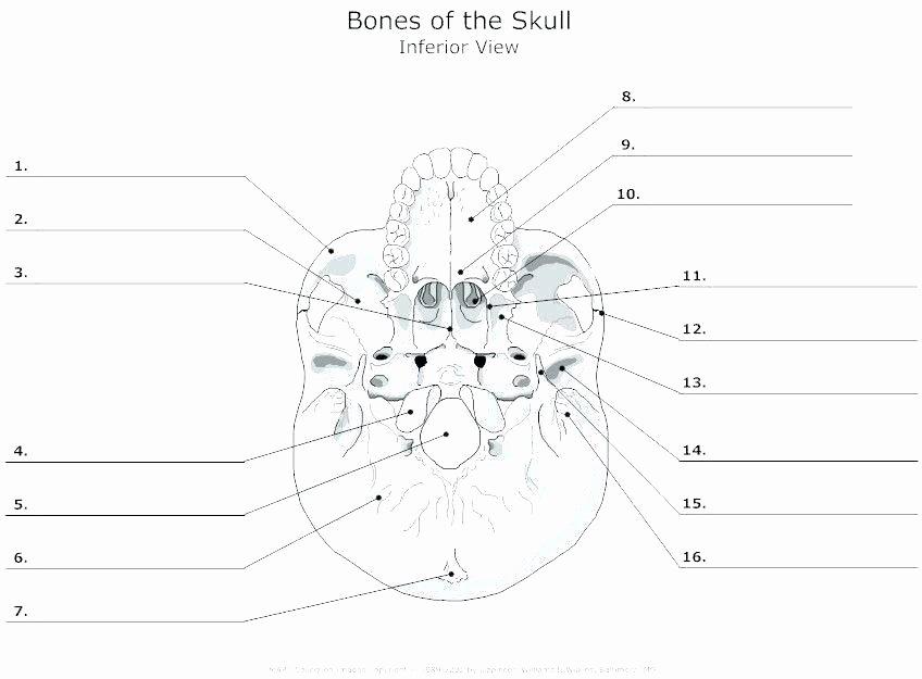 Blank Bone Worksheets Unique Labelimg Download