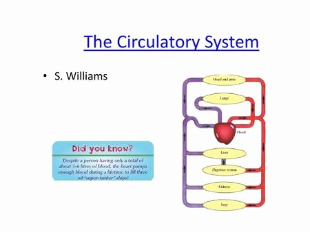 Blank Diagram Of the Heart B2 topic 3 Starter Stick In the Heart Diagram Ppt Video