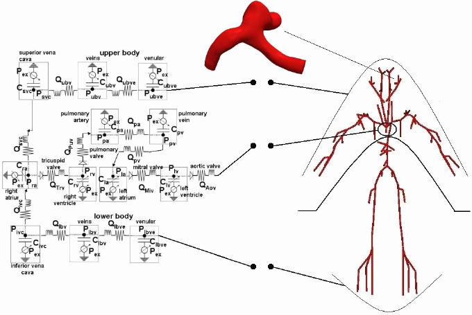 Blank Heart Diagram to Label Heart Model Diagram Wiring Diagrams Rock