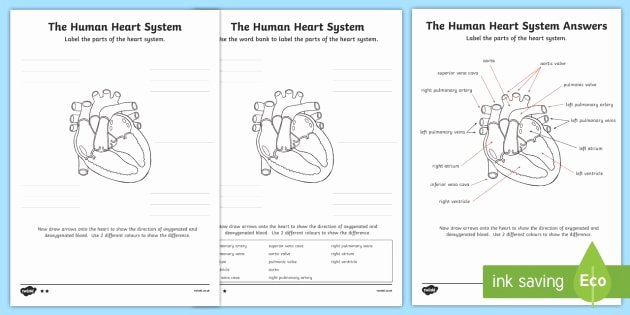 Blank Heart Diagram to Label the Human Heart Cardiovascular System Labelling Worksheet