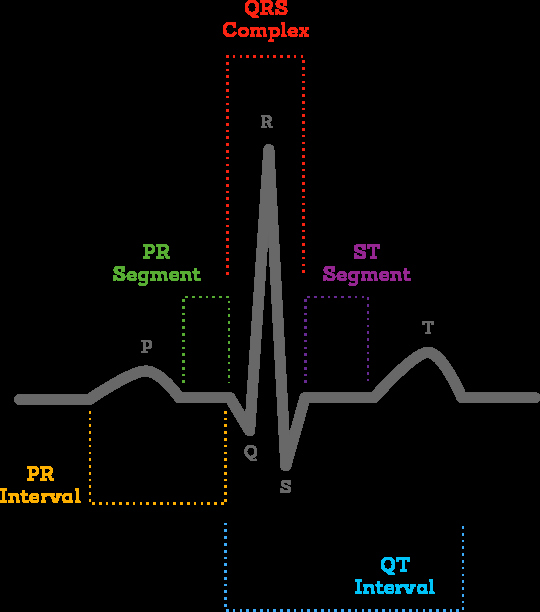 Blank Heart Diagram to Label What is An Ecg