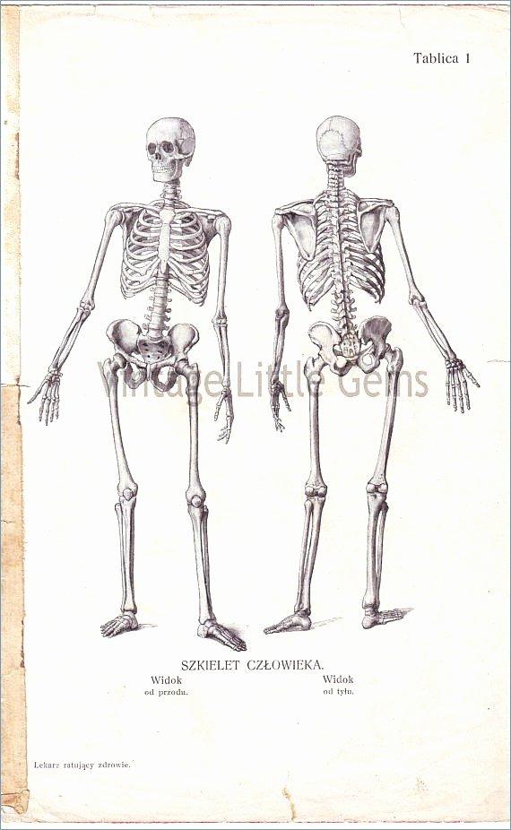 Blank Human Body Diagram Fresh Skeleton Diagram Label Wiring Diagrams Rock