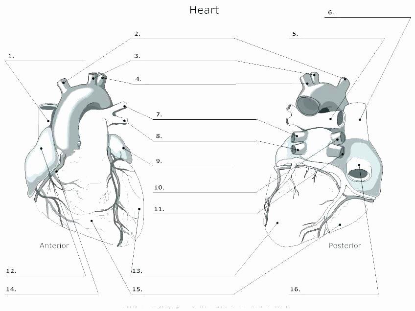 Blank Human Body Diagram New Blank Heart Diagram Worksheet – Shopnext