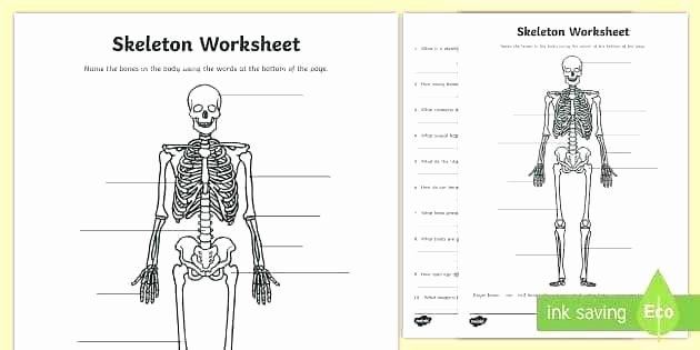 skeleton activity sheet mon names printable worksheets human anatomy for kindergarten s worksheet 2 free blank bone diagram template database co the skeleto