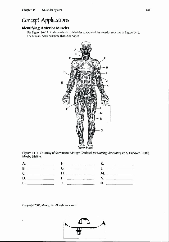 Blank Muscle Diagram to Label Anatomy Worksheets