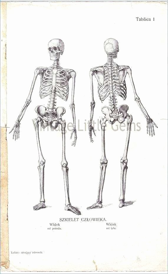 Blank Muscle Diagram to Label Bones Skeleton Diagram with Labels – Vmglobal