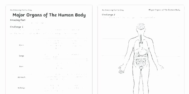 Blank Muscle Diagram to Label Missing Numbers Fill In the Blanks Worksheet First Grade