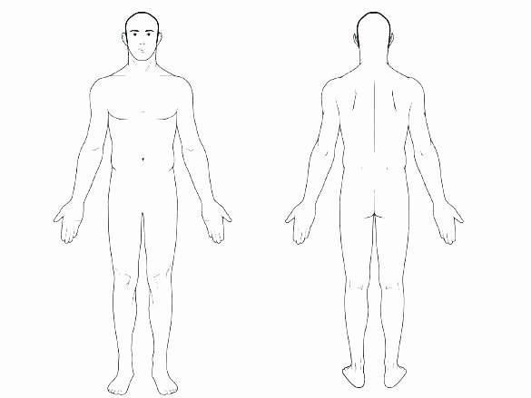 Blank Muscle Diagram to Label Muscle Fill In the Blank Worksheets