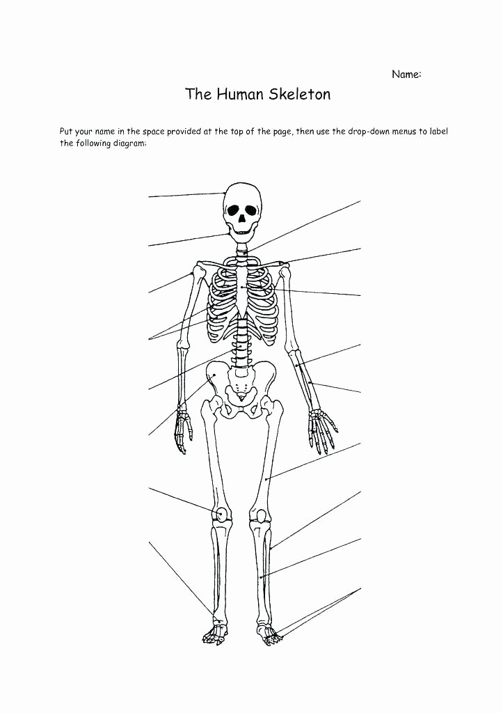 Blank Muscle Diagram to Label Skeletal System Coloring Worksheet – Psubarstool