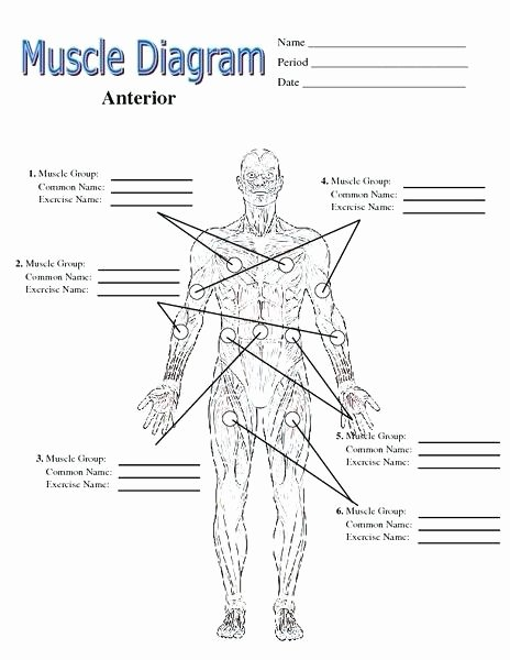 Blank Muscle Diagram Worksheet Awesome Diagram Worksheet – Vishalcargopackersmover