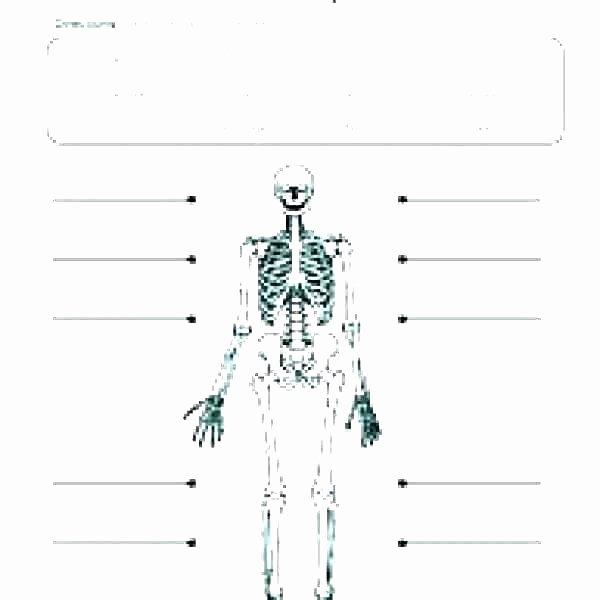 Blank Skeletal System Worksheet 3rd Grade Human Body Worksheets