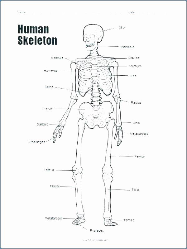 Blank Skeletal System Worksheet Anatomy Worksheets Printable Anatomy Worksheets Pretty