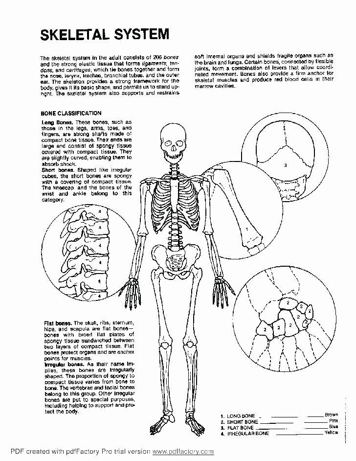 Blank Skeletal System Worksheet How to Draw A Skeletal System – Golfpachuca