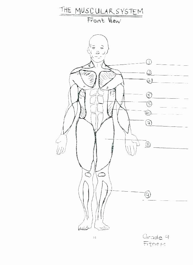 Blank Skeletal System Worksheet Printable Anatomy Labeling Worksheets Shoulder Worksheet