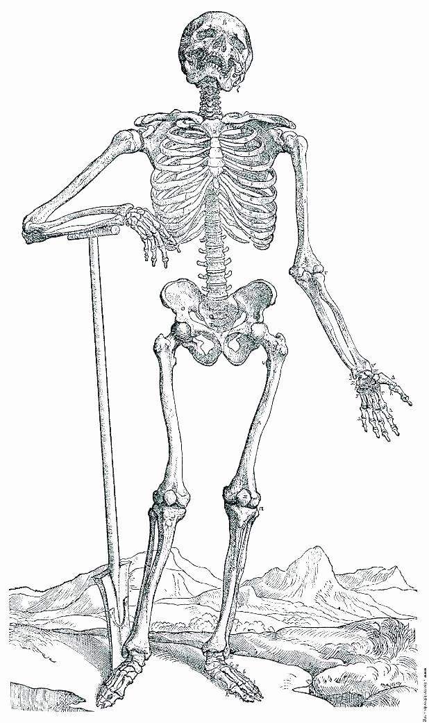 Blank Skeletal System Worksheet Skeletal System Coloring Pages – Studensfo