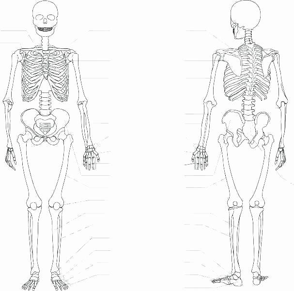 Blank Skeletal System Worksheet Skeletal System Printable Worksheets Pleasant Figure Tal