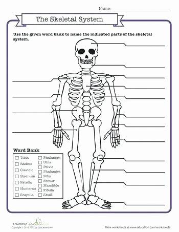 Blank Skeletal System Worksheet Skeletal System Quiz Grade Science Ideas Human Body Systems
