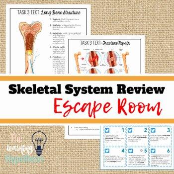 Blank Skeletal System Worksheet Skeletal System Worksheets