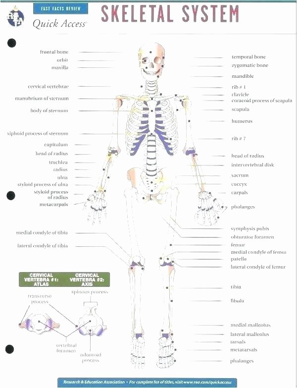 Blank Skeletal System Worksheet Skeleton Parts Printable Human Anatomy and Physiology