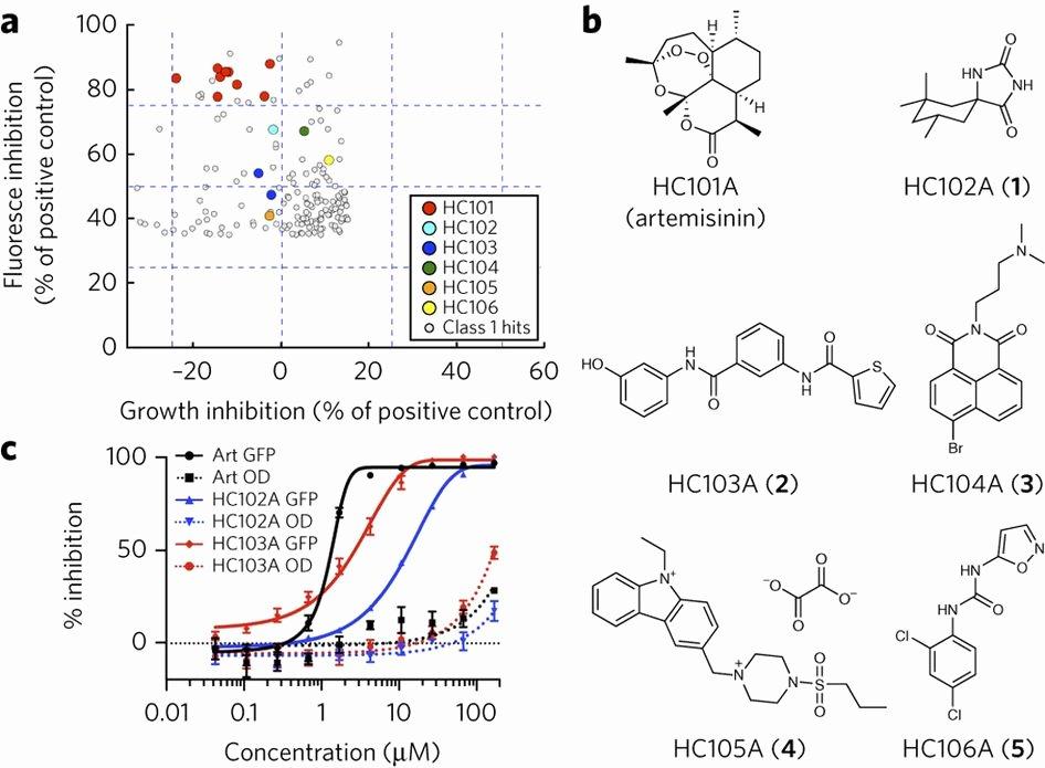 Blank Skeleton Diagram Inhibitors Of Mycobacterium Tuberculosis Dosrst Signaling