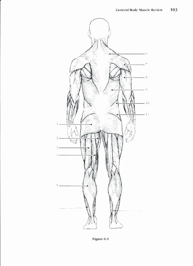 Blank Skeleton Diagram Muscle Fill In the Blank Worksheets
