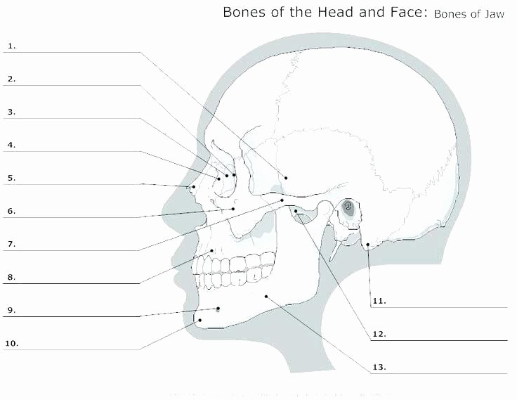 Blank Skeleton Diagram Skeletal System Printable Worksheets Simple Bone Diagram Co
