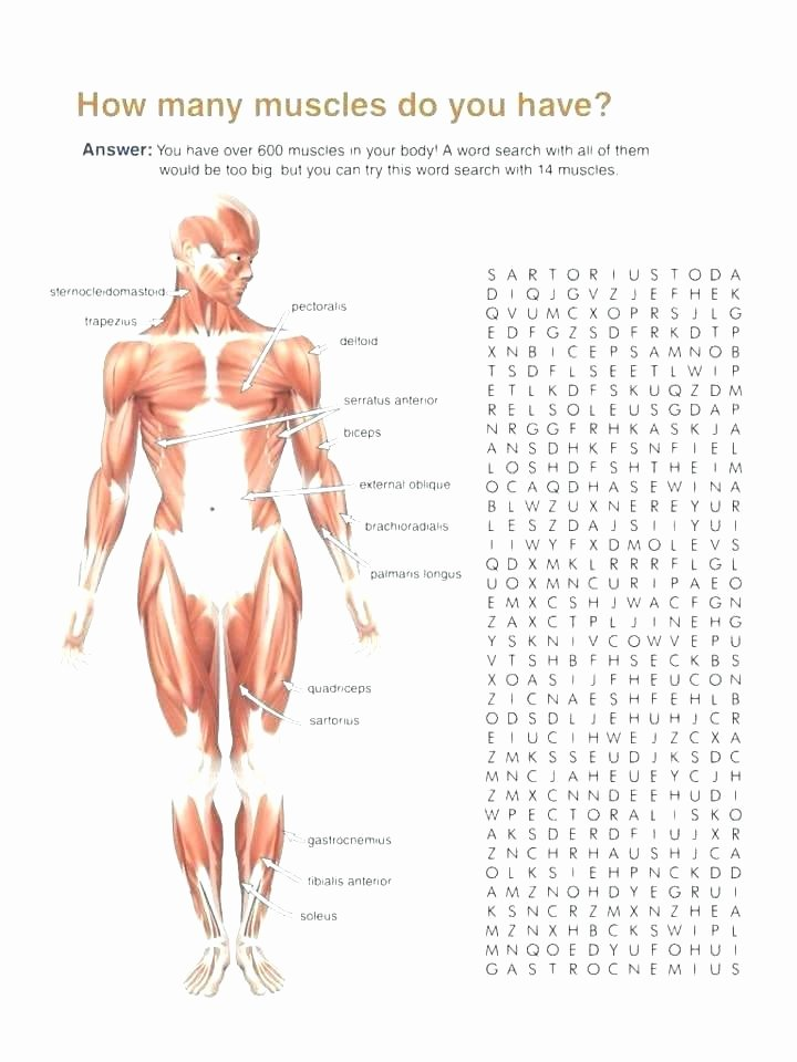 Body Systems Crossword Puzzle Human Body Crossword Puzzle Worksheet for Grade 5th Science
