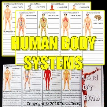 Body Systems Crossword Puzzle Human Body Systems Middle School Worksheets & Teaching