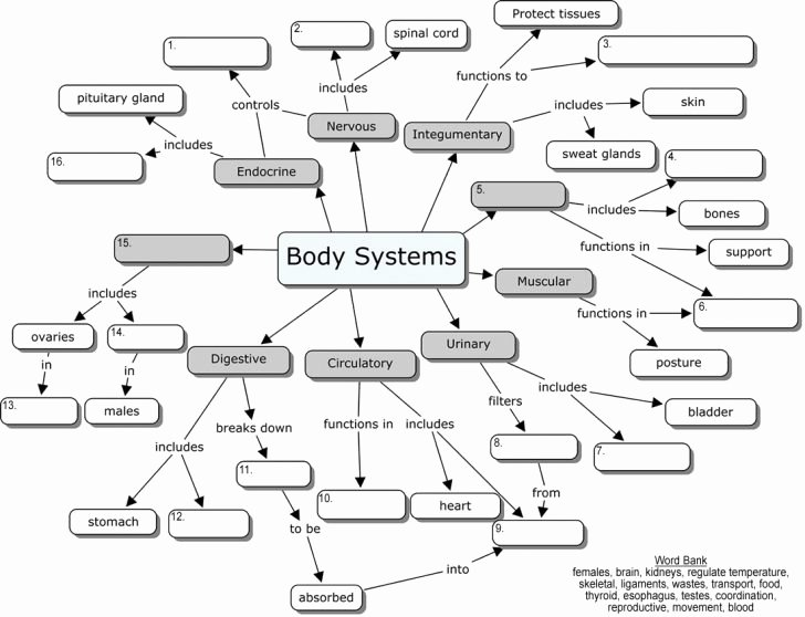 Body Systems Crossword Puzzle Worksheet Ideas organ Systems Blanks Human Body Systems