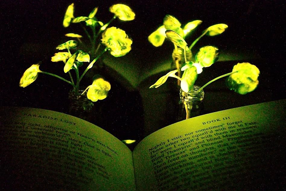 Body Systems Crossword these Glowing Plants Could E Day Light Our Homes