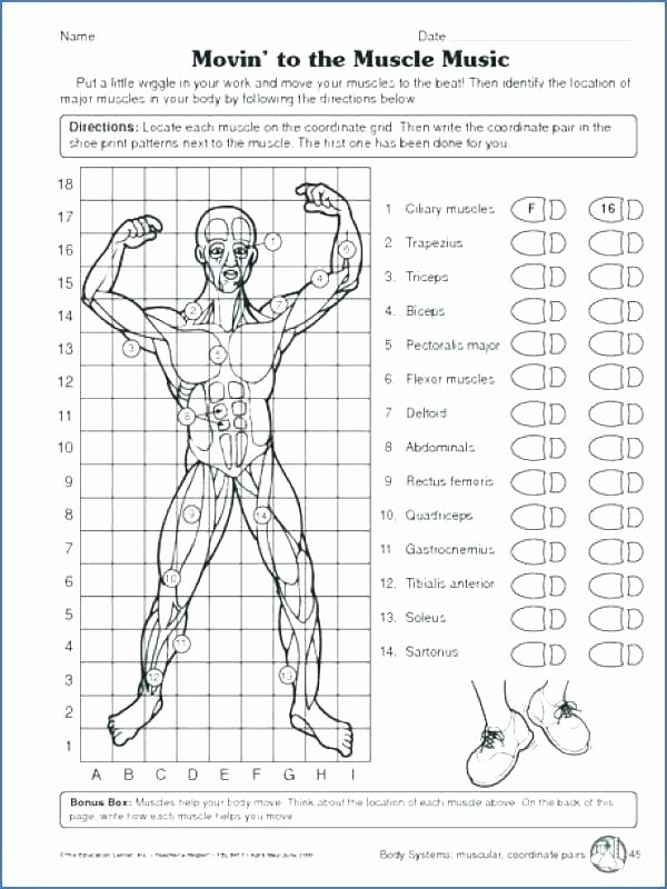Body Systems Worksheet Answers Grade 5 Science Worksheets Human Body Second Grade Science