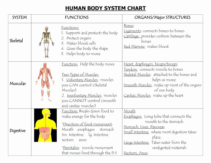 Body Systems Worksheet Answers Human Body organ Systems Worksheet Unique Body Systems and