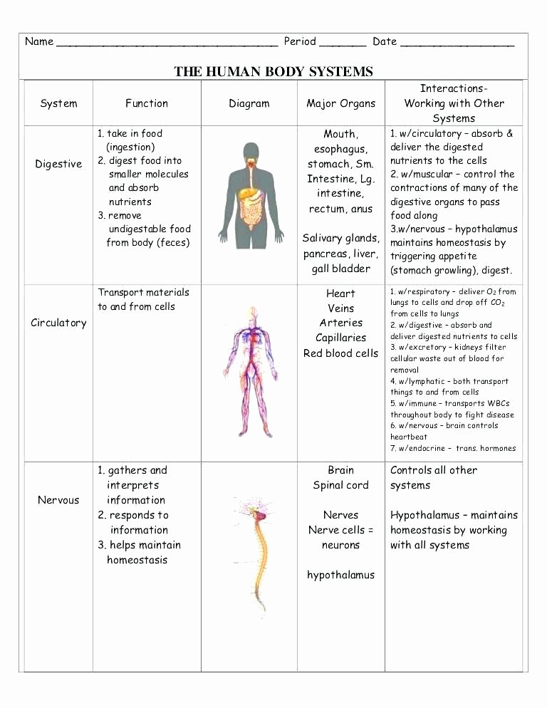 Body Systems Worksheet Answers Human Body Systems Worksheets Den for Grade Reading 5 Science