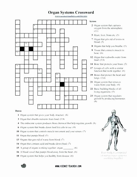 Body Systems Worksheet Answers Human Hormones Worksheets – Primalvape