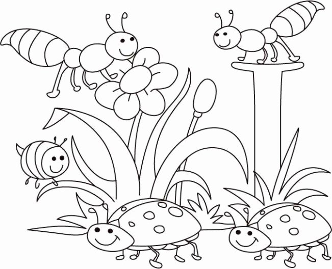 Bug Worksheets for Preschool Insect Coloring Pages Fresh Insect Printables 12 Fly