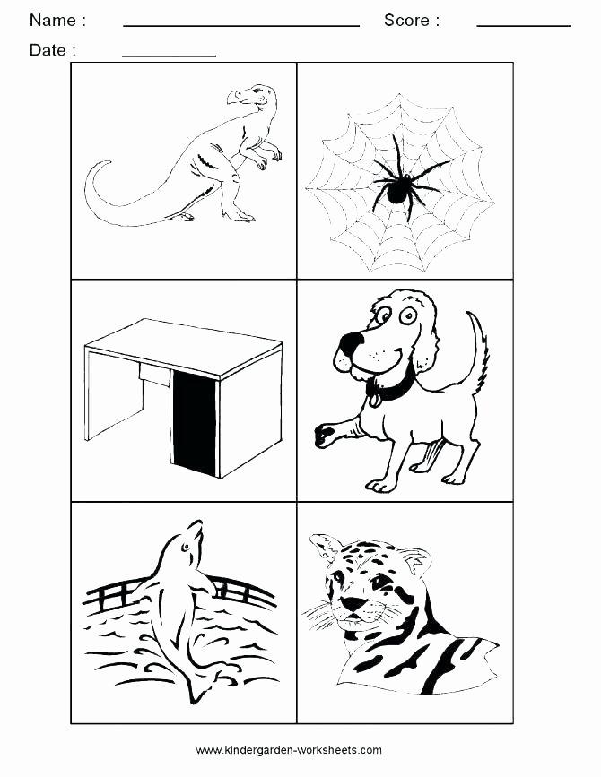 Categorizing Worksheets for Kindergarten Awesome Categorizing Worksheets for Kindergarten Classify and
