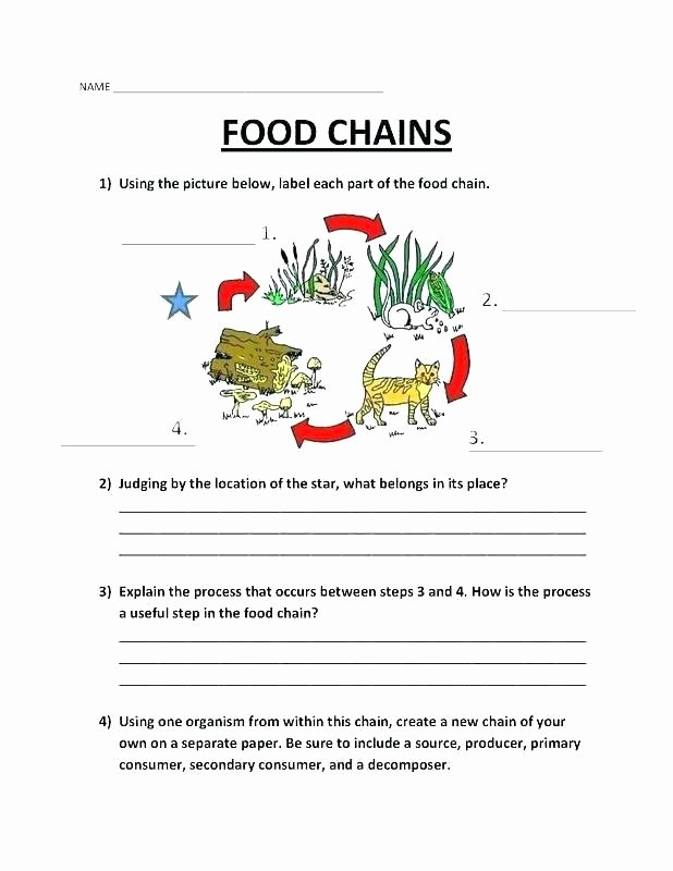 Cooking Worksheets for Middle School Food Web Printable Worksheets – Onlineoutlet