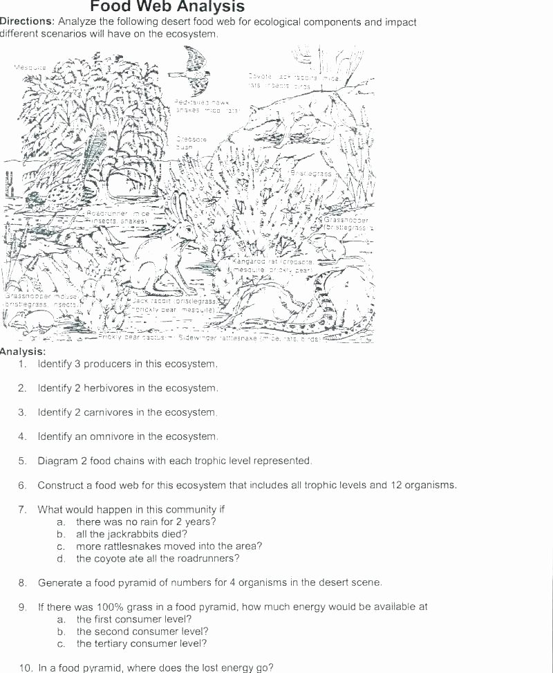 Cooking Worksheets for Middle School Free Food Chain Worksheets