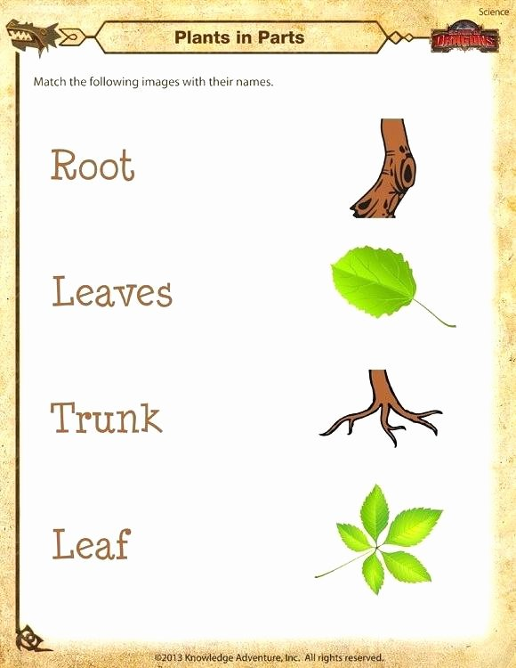 Diamond Worksheets for Preschool Kindergarten Science Worksheets Plants