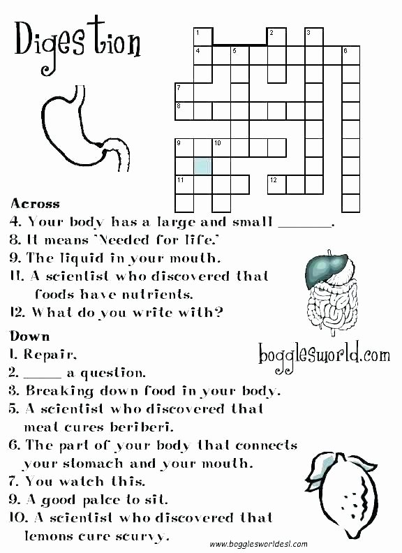 Digestive System Coloring Sheet Luxury Body Systems Worksheets Answers