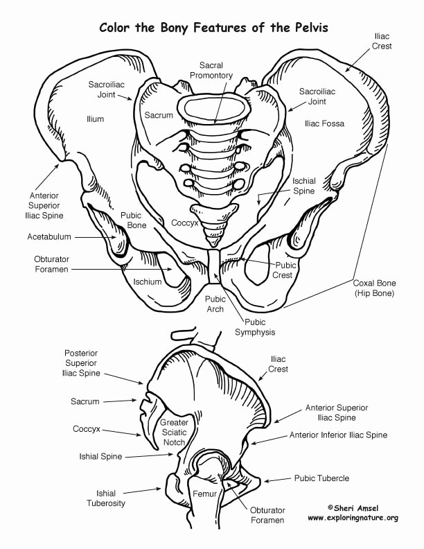 Digestive System Coloring Sheets Best Of Human Body – Coloring Nature