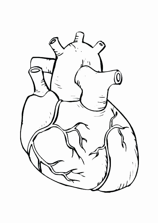 Digestive System Coloring Sheets Unique Key Coloring Page – Furbox